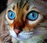 Beautiful eyes in cats