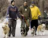 Walking city dogs