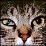 Anisocoria in cats